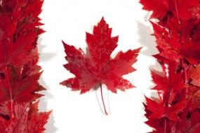 Du học Canada - Cập nhật thông tin mới nhất 10/2019