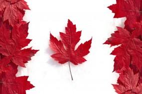 Một vài sự thay đổi quan trọng trong chính sách nhập cư Canada áp dụng từ ngày 19/11/2016.